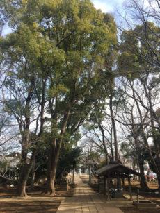 20180130_ujigami_01