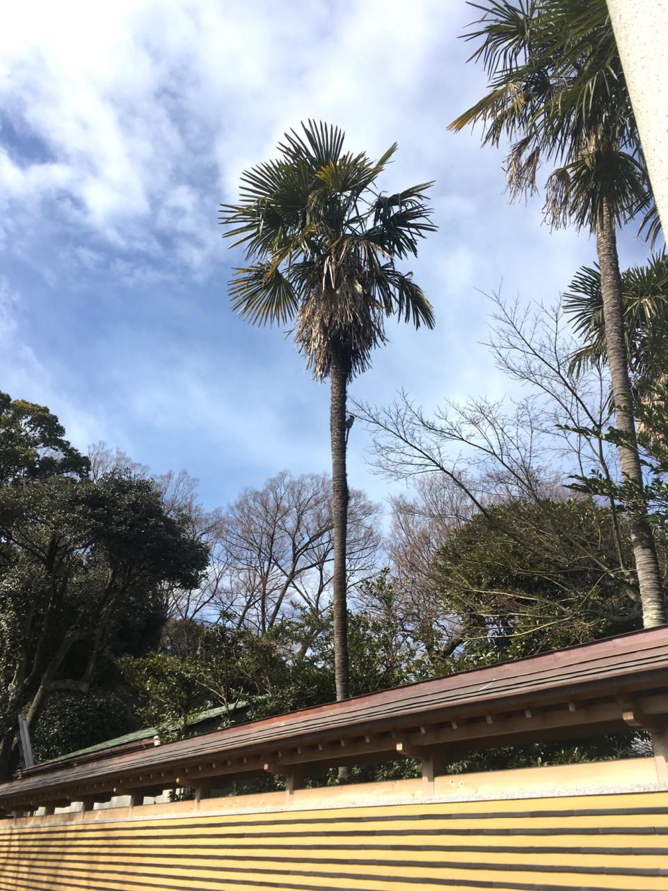 20180130_ujigami_03