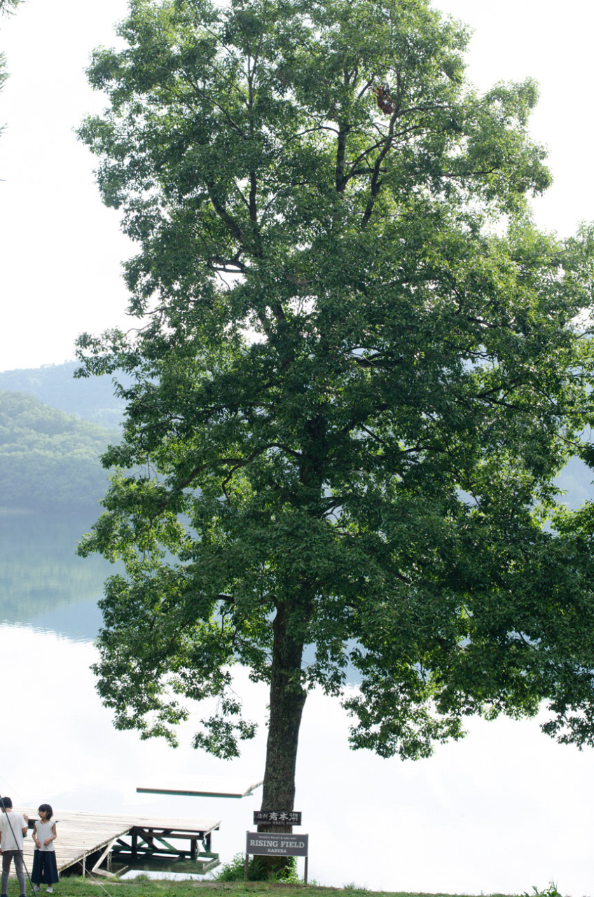 20180909_tree